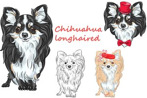 Dog longhaired Chihuahua SET