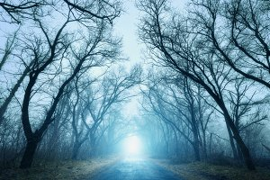 Scary autumn forest in fog with road