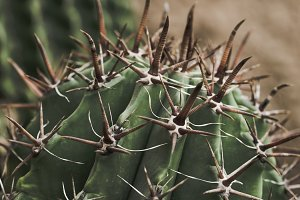 Cactus with dark spikes