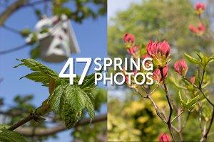 Spring Blossom Photo Set