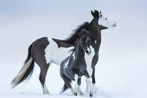 Mare whit foal
