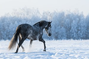 Lonely gray horse
