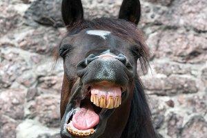 Funny yawning horse