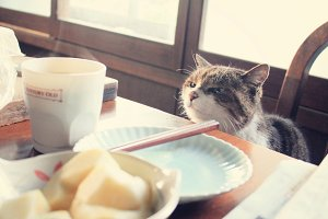 Hungry funny cat