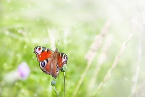 Butterfly on flower in the field