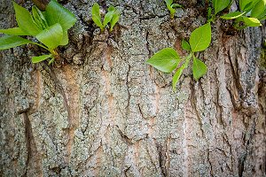 Wooden background trunk of tree