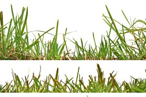 Four background front grass set