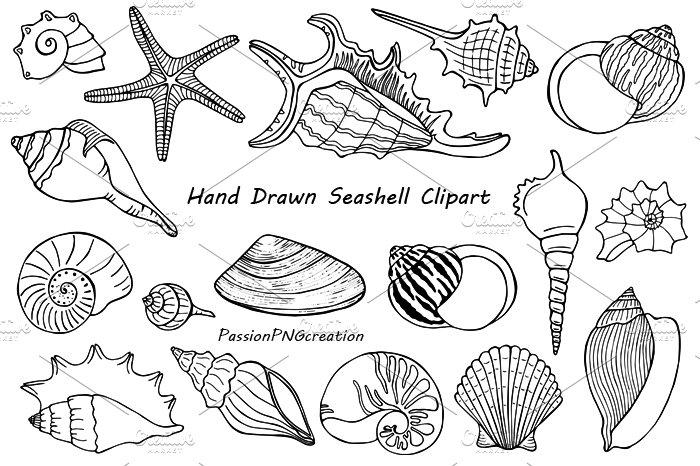 Hand Drawn Seashell Clipart ~ Illustrations ~ Creative Market