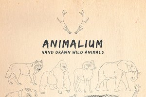 Animalium: Hand Drawn Wild Animals