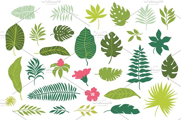 tropical leaves graphic patterns creative market