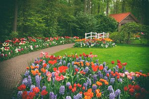Hut in a spring