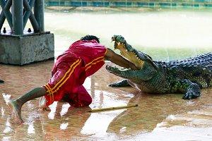 Crocodile show in Thailand.