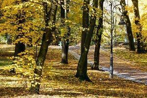 Autumn city park.