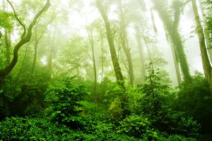 View on foggy green forest