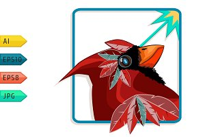 Cardinal bird with burning look.