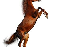 Rearing sorrel horse
