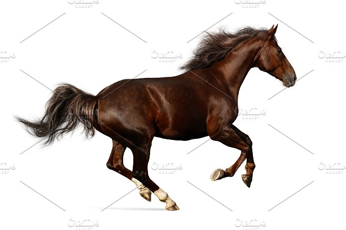 Galloping horse. Isolated on white - Animals