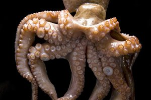 octopus on a black background