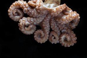 octopus on a black