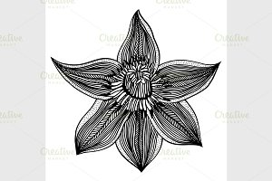 sketch of flower lily
