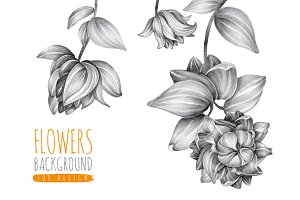 Flowers background (hand drawing)