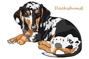 Dog Dachshund breed