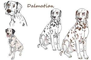 Dog Dalmatian SET