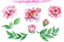 Watercolor Peony Set