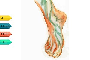 Water-colour drawing of humans foot.