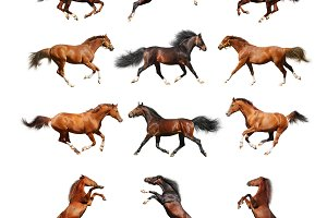 Horse collection. Isolated on white.