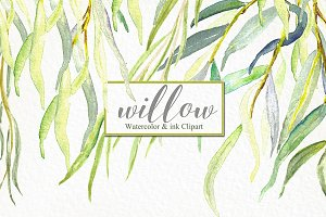 Willow branches watercolor