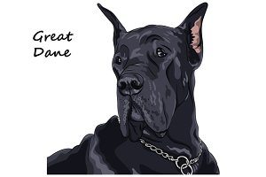 Dog Great Dane 2