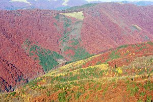 Autumn colored mountain slopes.