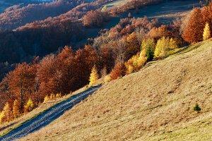 Rural road in autumn mountain.
