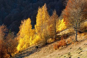 Golden autumn in mountain.