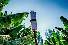 Banana Plantation Incorporated