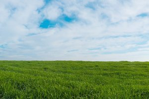 Panoramic view on a green field
