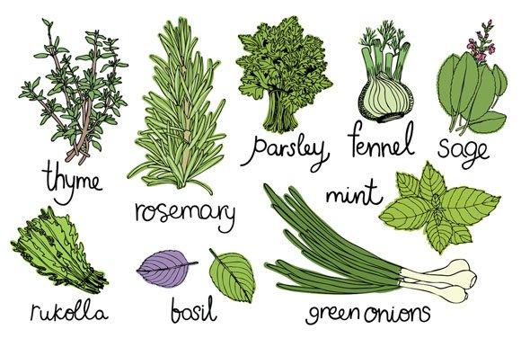 Culinary herbs set ~