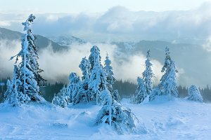Winter mountain view with firs