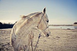 iseeyouphoto coolhorse