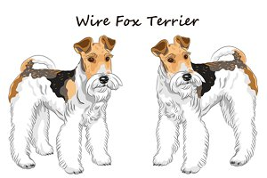 Dog Wire Fox Terrier SET