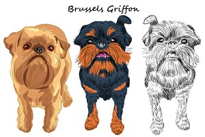 Dog Brussels Griffon SET