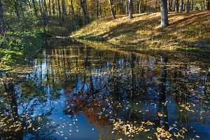 Pond in the city autumn park.