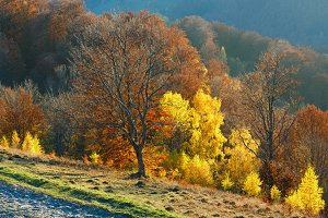 Rural road and golden autumn