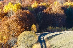 Golden autumn in mountain.
