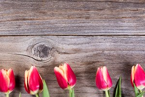 Lovely Tulips on Wood