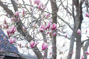 Beacons of spring