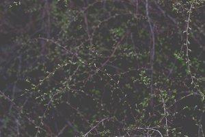 Moody spring leaves