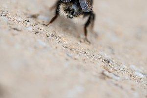 Bumblebee got back