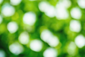 Fresh green blurred background